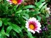 گل زيبا/ باغ گلها اصفهان